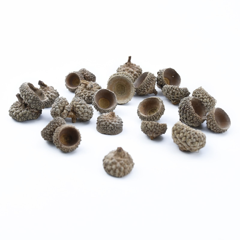 20pcs Natural Dried flowers Pine cone Acorn wholesale Artificial Flower For Home Christmas DIY Garland Wreath wedding Decoration